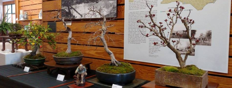Beginner Bonsai Workshop